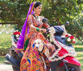 Pets, Cats, Dogs, Desi, Wedding, Indian, Traditional, Love, Family